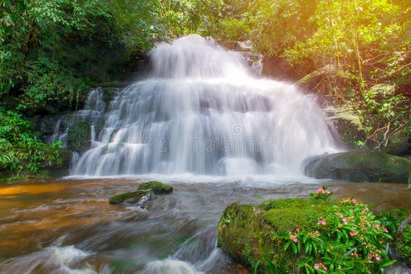 belle cascade dans la forêt tropicale au phet de montagne d'idiot de baquet de phu photos stock