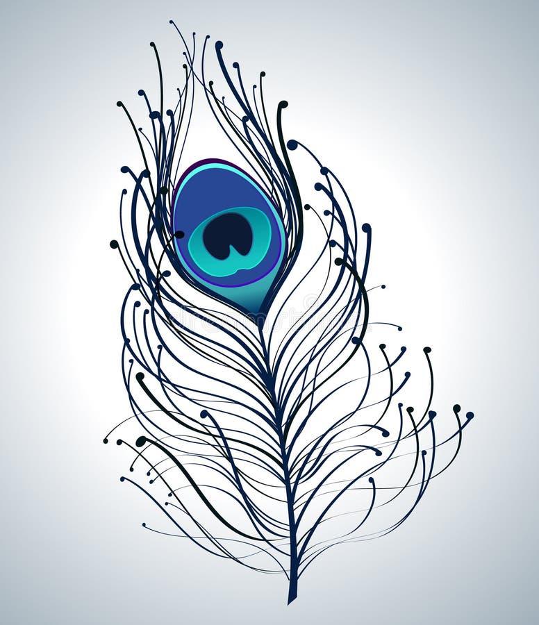 Belle clavette de paon illustration stock