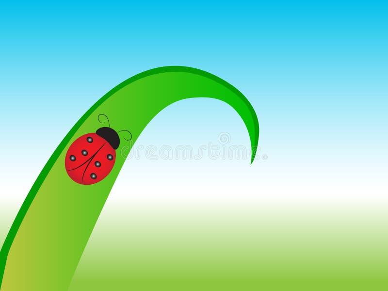Belle coccinelle sur la feuille verte sur le pré illustration libre de droits