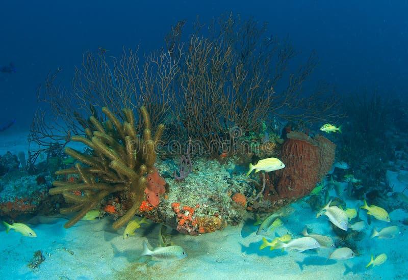 Belle composition de récif photographie stock libre de droits