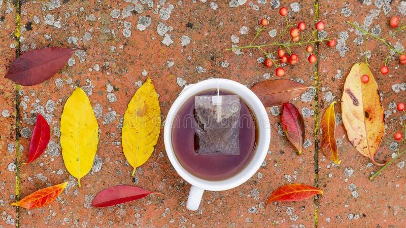 Belle composition immobile en vie avec une tasse complètement de baies de thé et de feuilles de couleur automne photographie stock