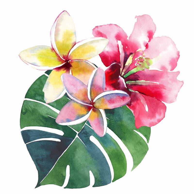 Belle belle composition mignonne tropicale de fines herbes florale verte lumineuse d'été d'Hawaï d'un flo jaune blanc rose rouge  illustration libre de droits