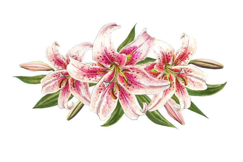 Belle composition rose en lis Bouquet des fleurs Impression florale Dessin de marqueur illustration de vecteur