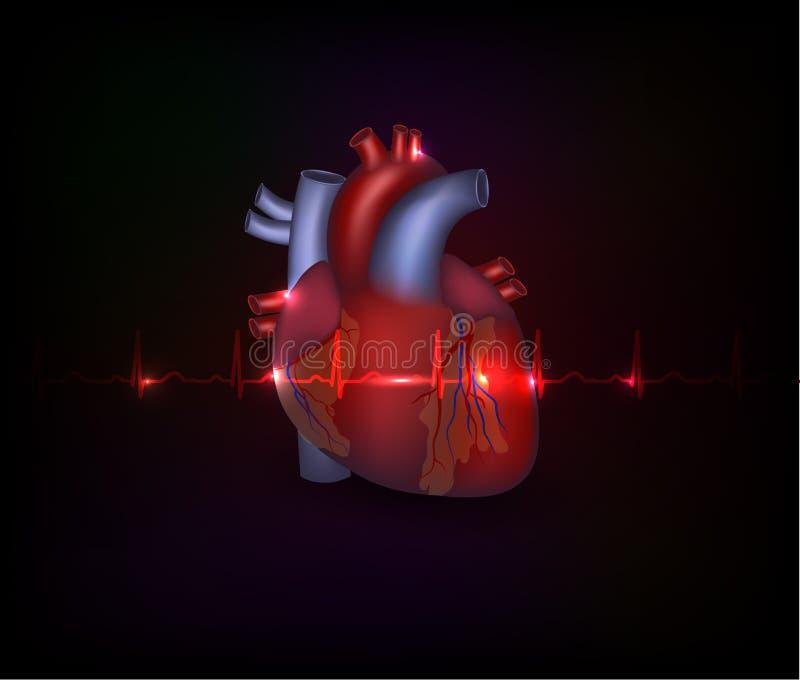 Belle conception de coeur de cardiologie et cardi normal illustration stock