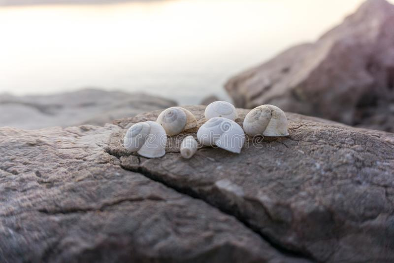 Belle conchiglie sulle rocce accanto alla spiaggia sul tramonto fotografie stock