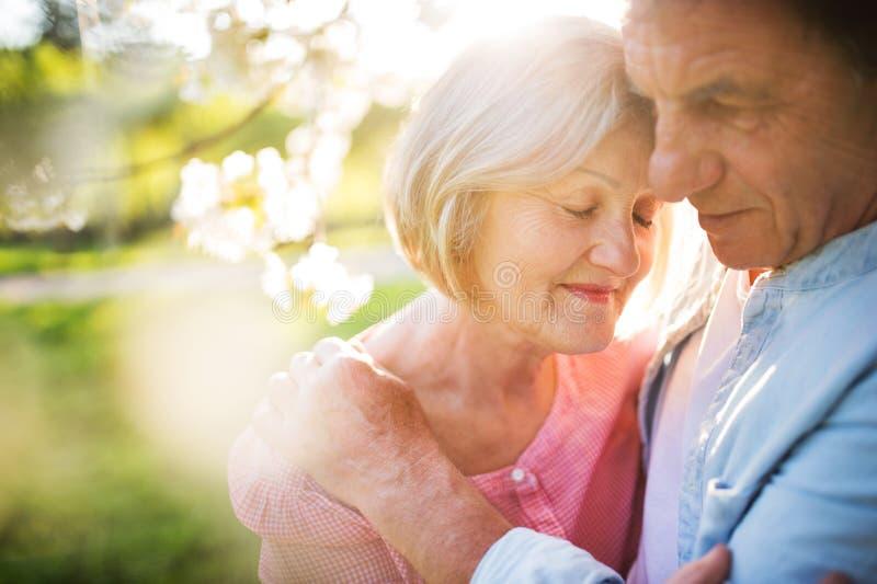 Belle coppie senior nell'amore fuori nella natura di primavera fotografia stock