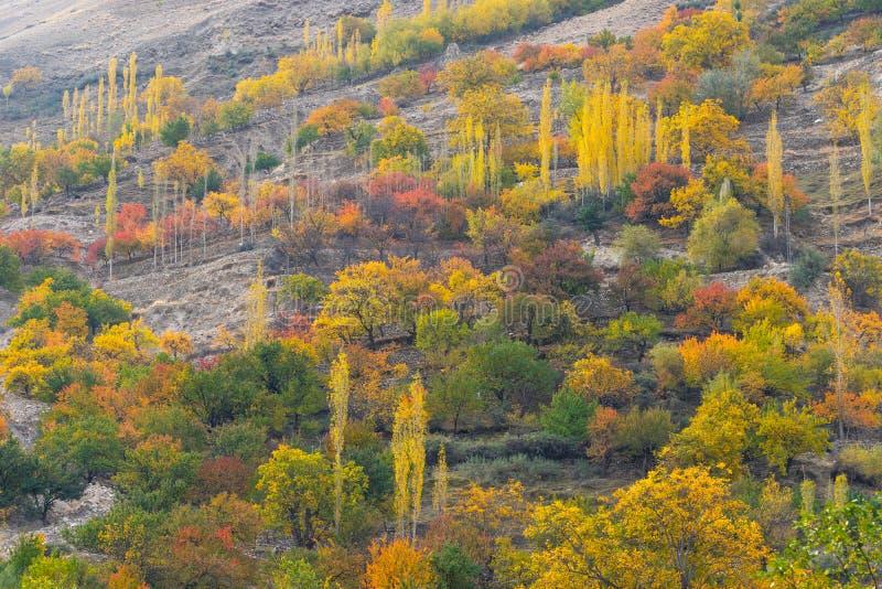 Belle couleur d'arbre dans la saison d'automne en vallée de Nagar dans Paki image libre de droits