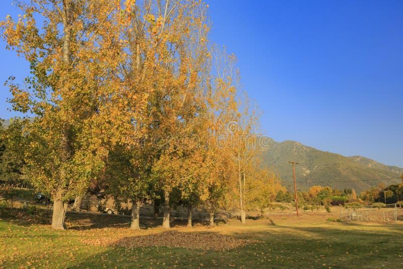 Belle couleur de chute au-dessus de région de gorge de chêne photos stock