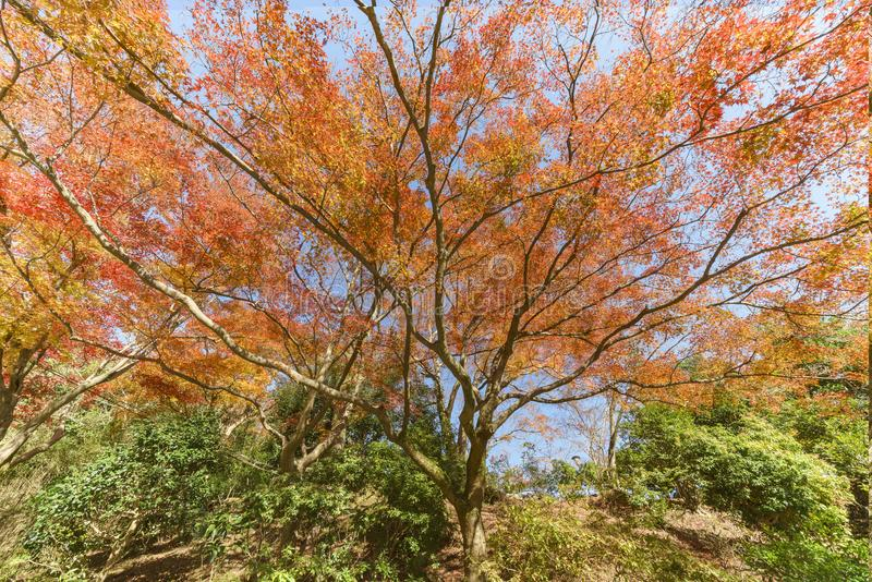Belle couleur de chute dans Arashiyama photo stock