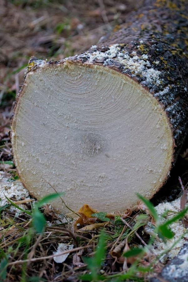 Belle coupe de bois image stock