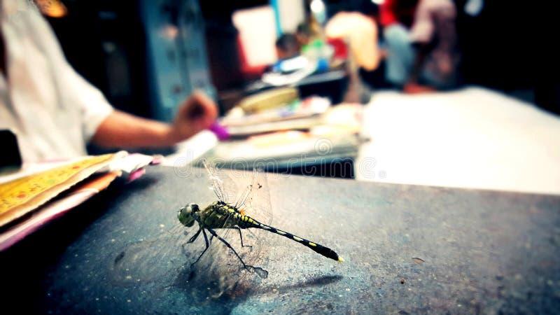 Belle créature Dragon Fly avec le bureau noir images stock