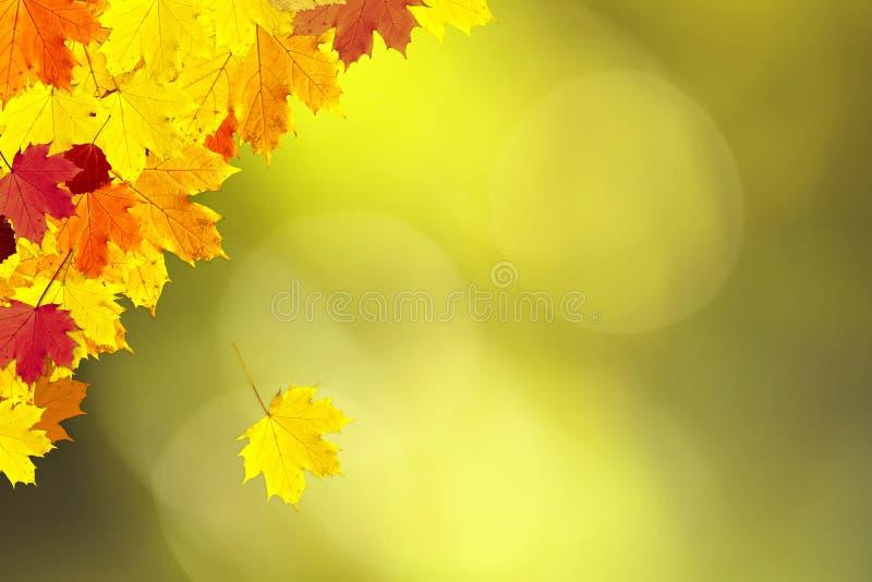 Belle décoration de feuilles d'automne sur le CCB ensoleillé de l'espace de copie de bokeh photographie stock