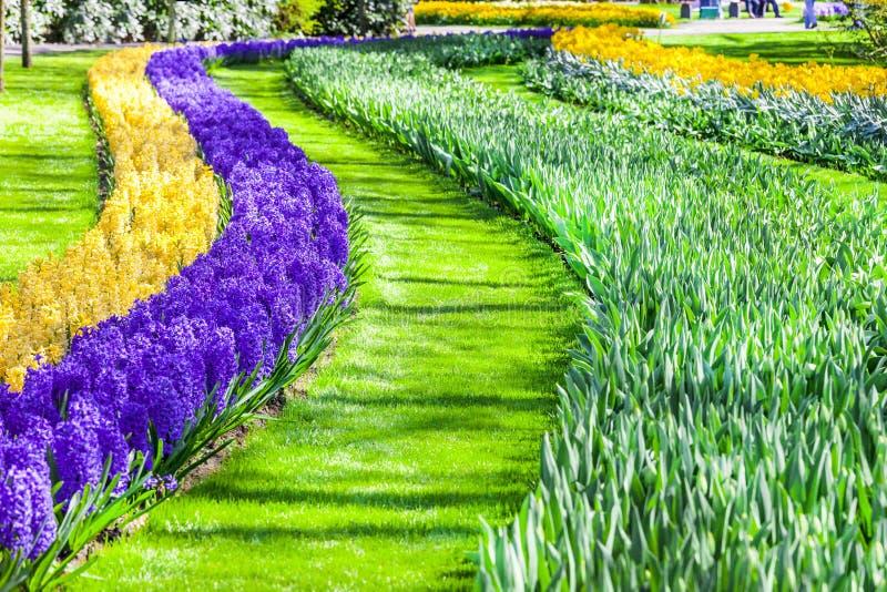 Belle décoration florale en parc de Keukenhof en Hollande image libre de droits