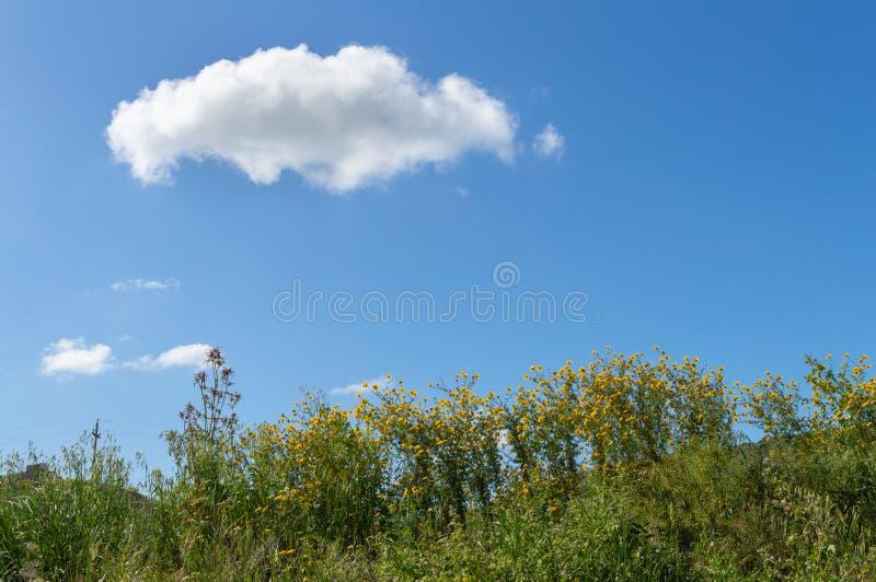 Belle Daisy Meadow sauvage, paysage sicilien, Mazzarino, Caltanissetta, Italie, l'Europe images libres de droits