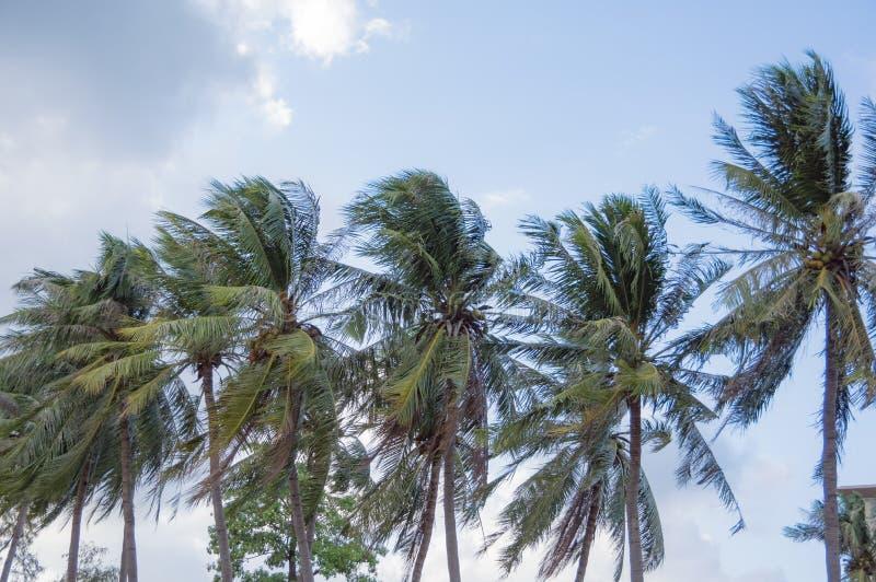 Belle et immaculée plage, la mer du ‹Vietnam, vagues blanches d'†de ‹d'â€, à sable jaune et détendant en été photo stock