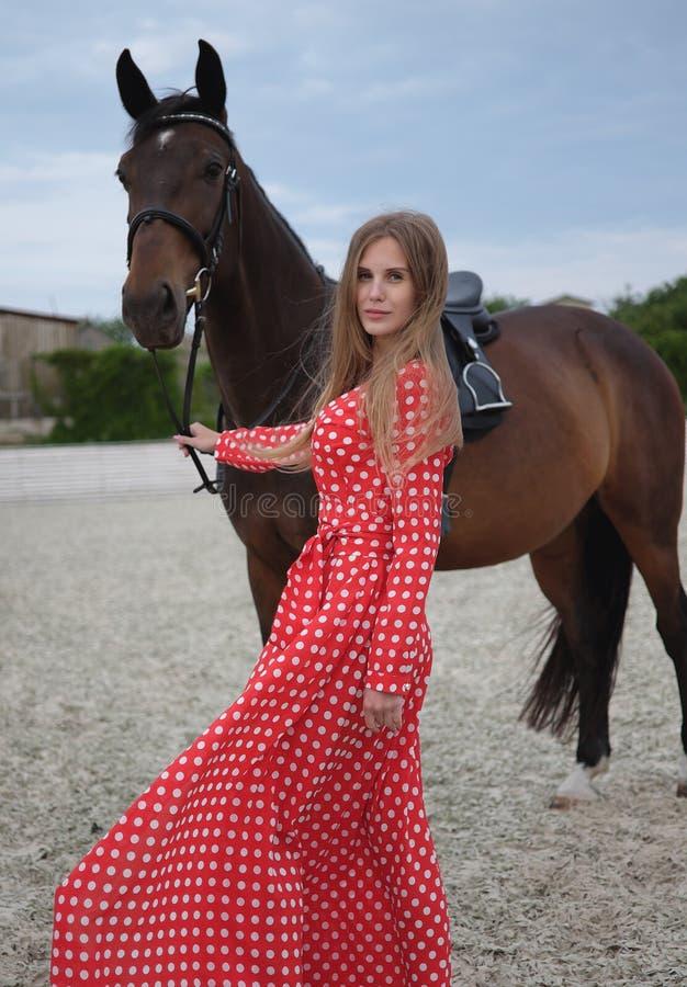 Belle et sexy blonde avec de grands seins dans une robe rouge et un cheval des costumes bruns photos stock