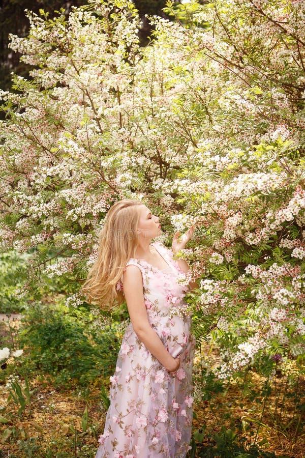 Belle femme enceinte en fleurs émouvantes de ventre et de sentir de robe rose de dentelle sur l'arbre images stock
