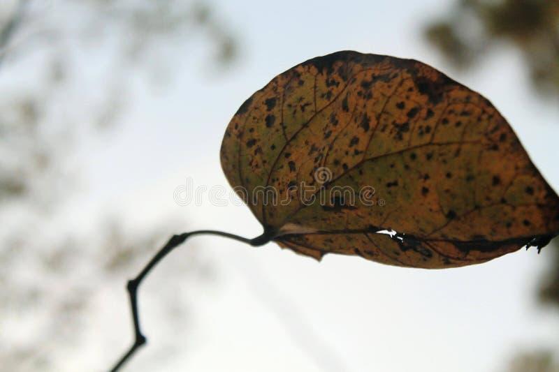 Belle feuille d'automne photo libre de droits
