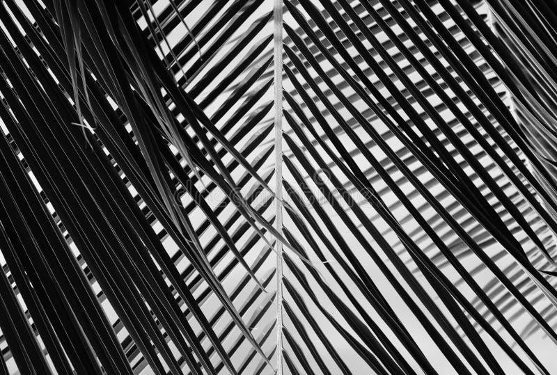 Belle feuille de palmier noire et blanche abstraite illustration stock