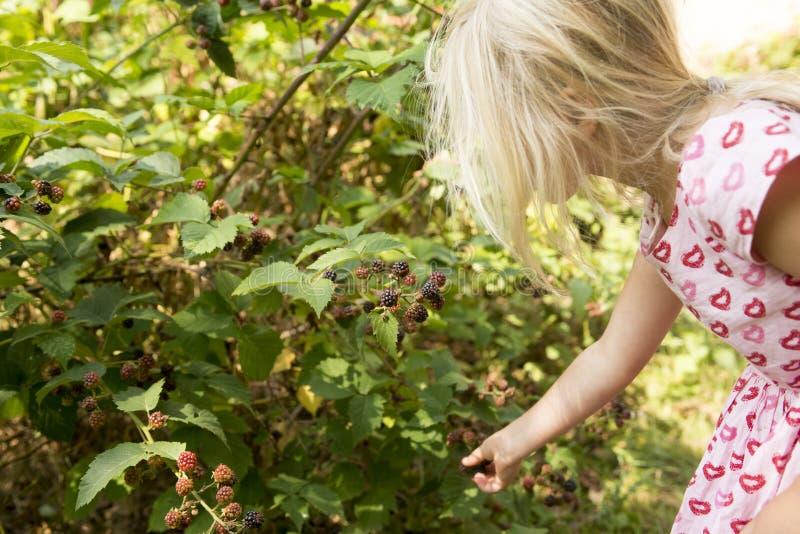 Belle fille avec Blackberry dans le jardin photos libres de droits