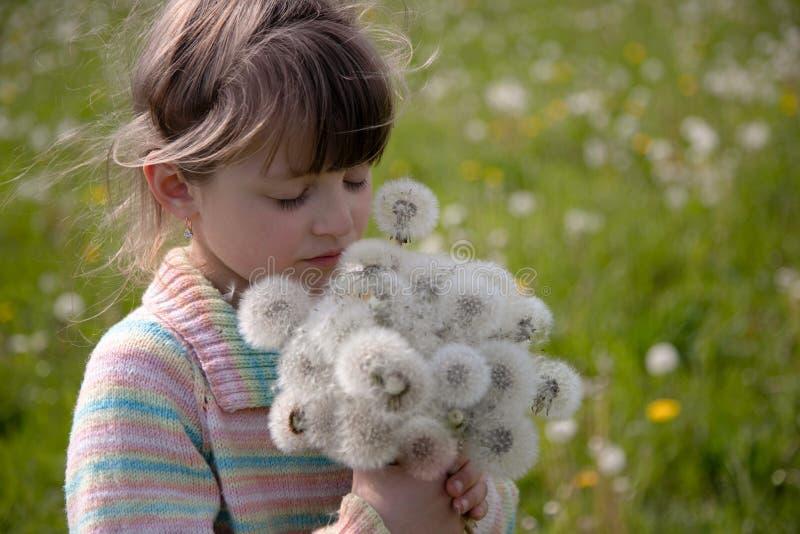 Belle fille avec un bouquet des pissenlits blancs sur un pré de ressort image stock