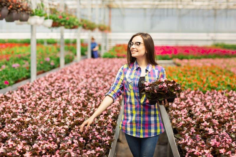 Belle fille de sourire en verres, ouvrière avec des fleurs en serre chaude La fille tient des fleurs des bégonias image stock