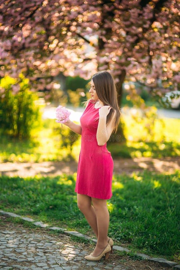 Belle fille posant au photographe dans la perspective des arbres roses de floraison Ressort Sakura image libre de droits