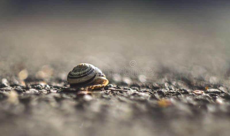 Belle fin d'une coquille vide d'escargot photographie stock libre de droits