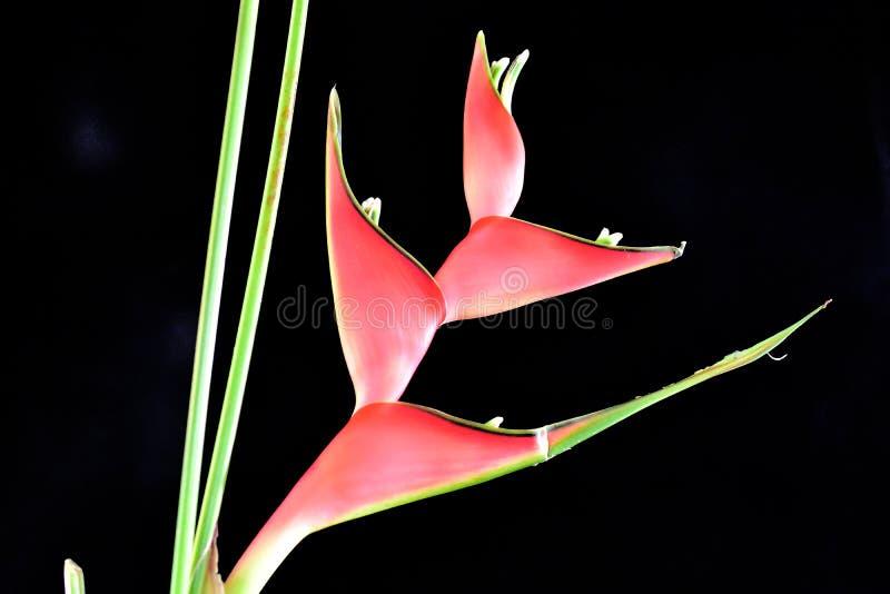 Belle fin exotique rouge de fleur au soleil photographie stock