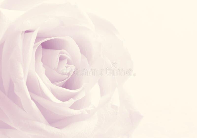 Belle fin modifiée la tonalité de rose de blanc comme fond de mariage doux photo libre de droits