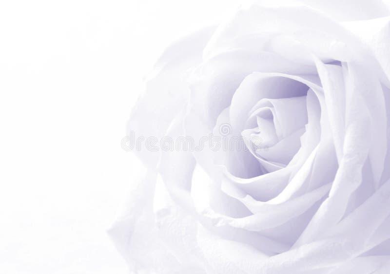 Belle fin modifiée la tonalité de rose de blanc comme fond de mariage doux photo stock