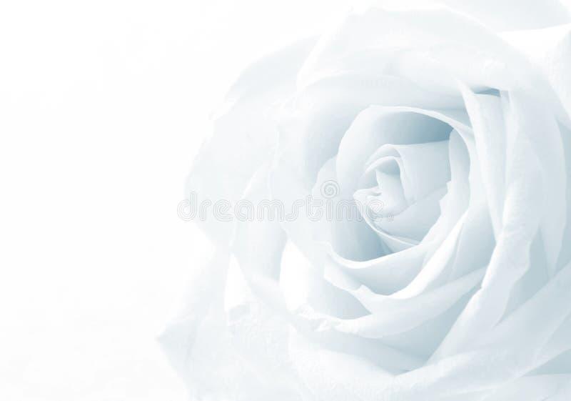 Belle fin modifiée la tonalité de rose de blanc comme fond de mariage doux photos stock