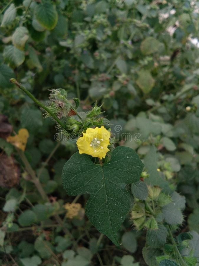 Belle fleur photographie stock libre de droits