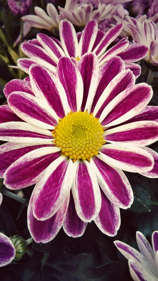 Belle fleur images libres de droits