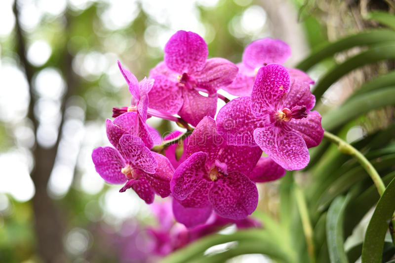 Download Belle fleur d'orchidée photo stock. Image du bouquet - 87708584