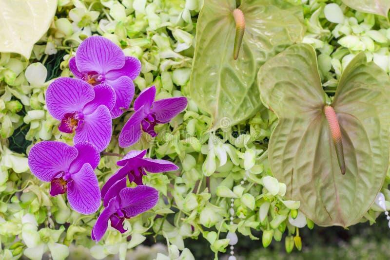 Belle fleur d'orchidée images libres de droits