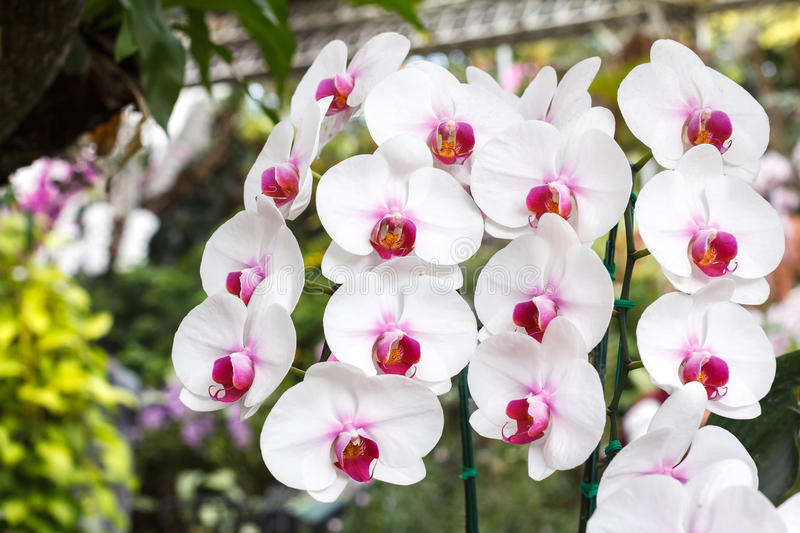 orchidee hiver