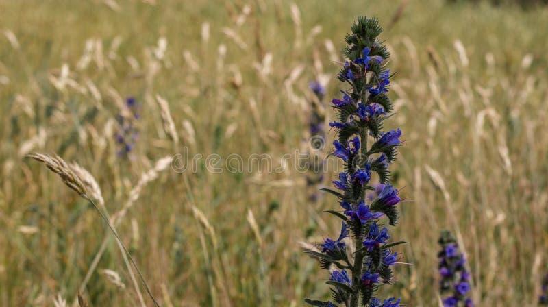 Belle fleur dans le domaine Ordinaire de contusion images stock