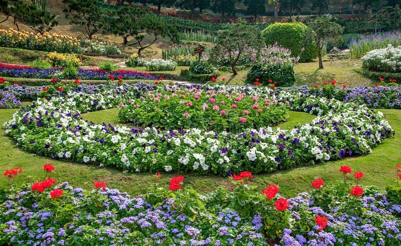 Belle fleur dans le jardin photos libres de droits