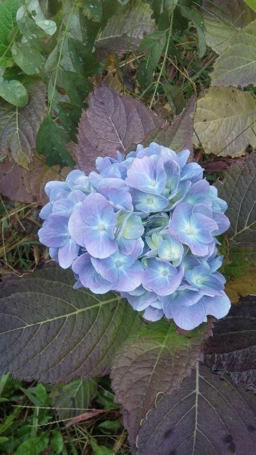 Belle fleur de montagne images stock