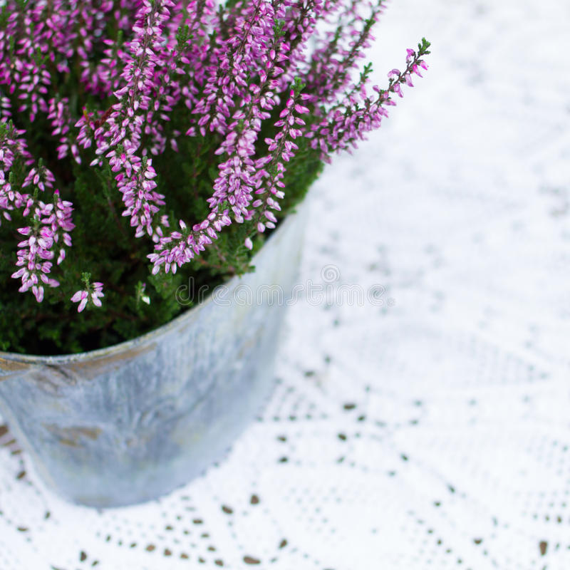 Download Belle fleur de source photo stock. Image du métal, personne - 77152540