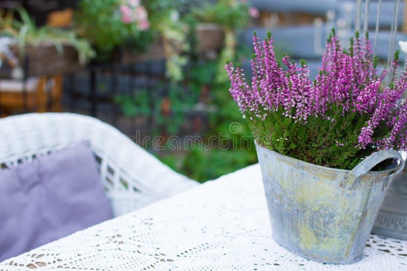 Download Belle fleur de source image stock. Image du violet, jour - 77153339