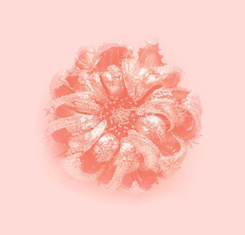 Belle fleur douce sur le fond rose en pastel Couleur de corail vivante à la mode images libres de droits