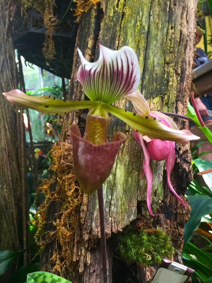 Belle fleur intense d'orchidée photo libre de droits