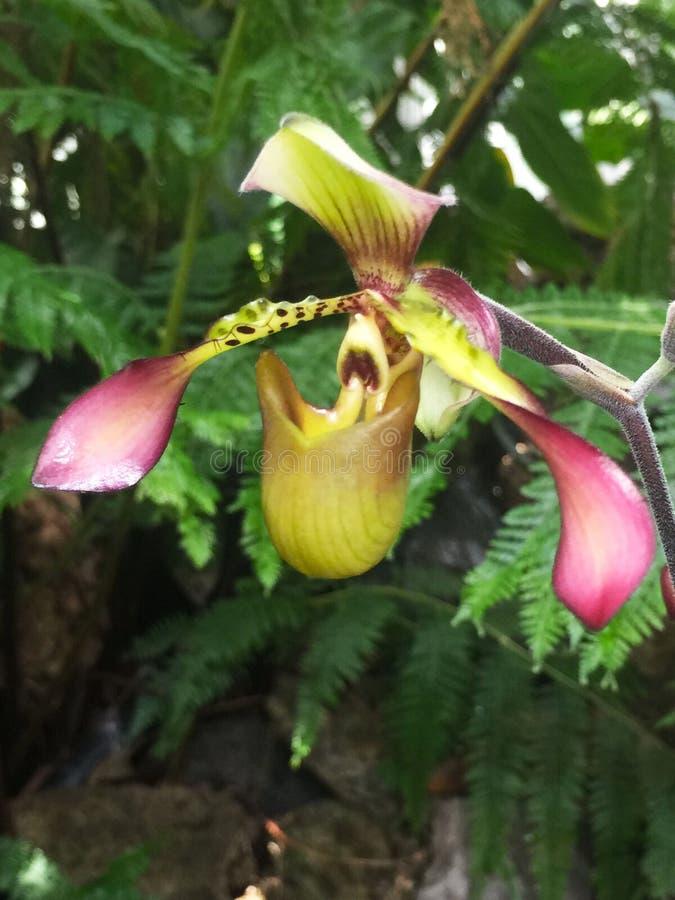 Belle fleur intense d'orchidée photos stock