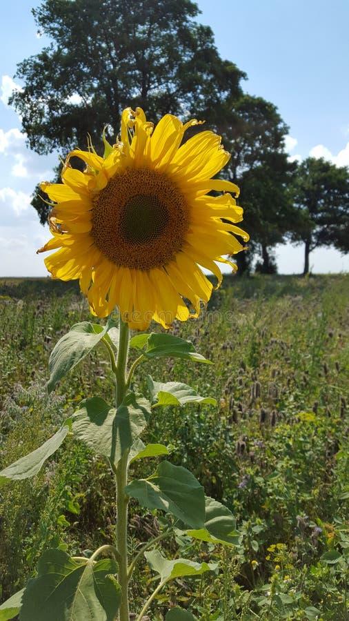 Belle fleur jaune photographie stock libre de droits