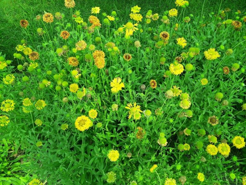 Belle fleur jaune par nature photographie stock
