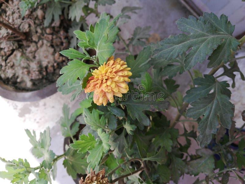 Belle fleur montrant l'amour à la nature image stock
