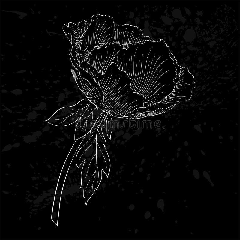 Belle fleur noire et blanche monochrome d'arborea de Paeonia d'usine (pivoine d'arbre) illustration libre de droits