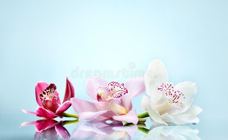 Belle fleur romantique d'orchidée image stock